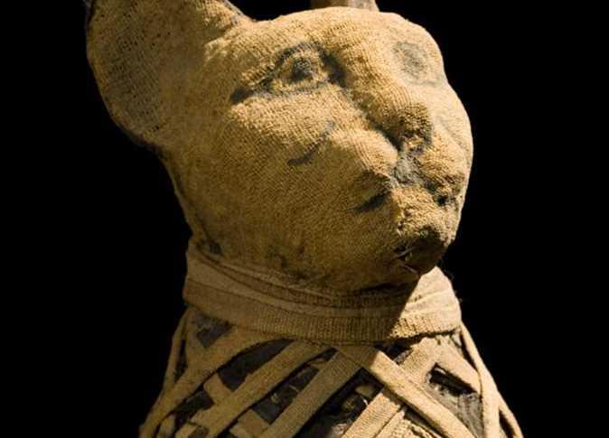 قطط العالم أصلها مصري