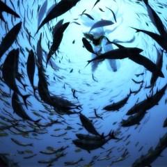 27 июня — Всемирный день рыболовства