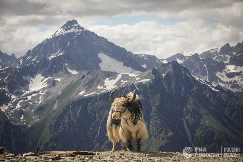 """Домбай называют """"сердцем гор"""". Домбайская долина расположена на высоте 1600 метров над уровнем моря, а горы вокруг нее достигают высоты в 3000 - 4000 метров."""