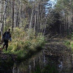 Под Курганом ищут потерявшуюся в лесу 87-летнюю пенсионерку