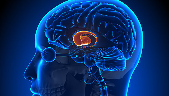 Биологи омолодили мышь, починив «центр старения» в ее мозге