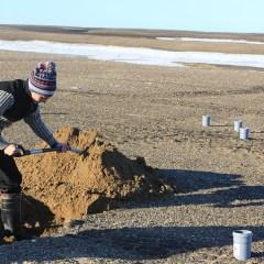 Ученые проведут микробиологическое исследование почвы на Земле Франца-Иосифа и Новой Земле
