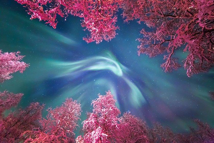 """Работа фотографа Юлии Жуликовой """"Корона северного сияния"""" (Auroral Crown). Автору удалось запечатлеть бирюзовые завитки полярного сияния над заснеженными деревьями, подсвеченными фонарями, на одной из улиц Мурманска."""