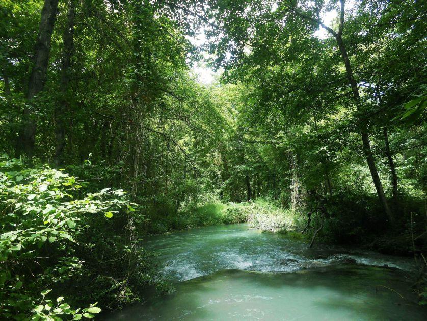 Путин заверил, что обратит внимание на угрозу для Самурского леса в Дагестане