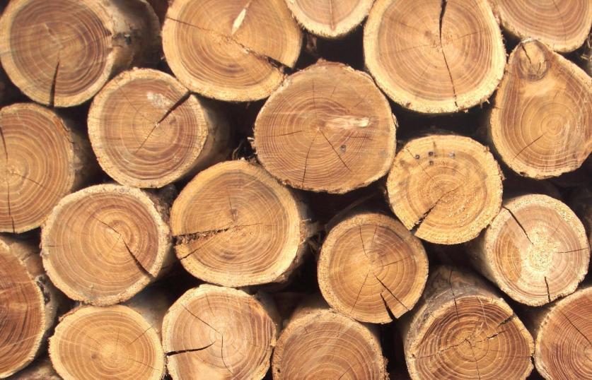 Ужесточается контроль за ценными видами древесины