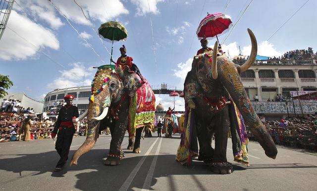 Численность индийских слонов составляет 41,4-52,3 тыс. особей, большинство из них обитают на родине - от 26,4 до 30,8 тыс.