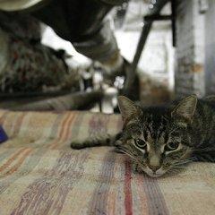 Одна из пострадавших в Эрмитаже кошек находится в клинике