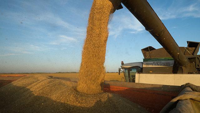 Правительство сочло стимулирование экспорта зерна выгоднее интервенций