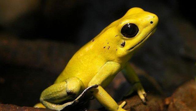 Экологи выяснили, какие животные вымрут первыми в ближайшее время