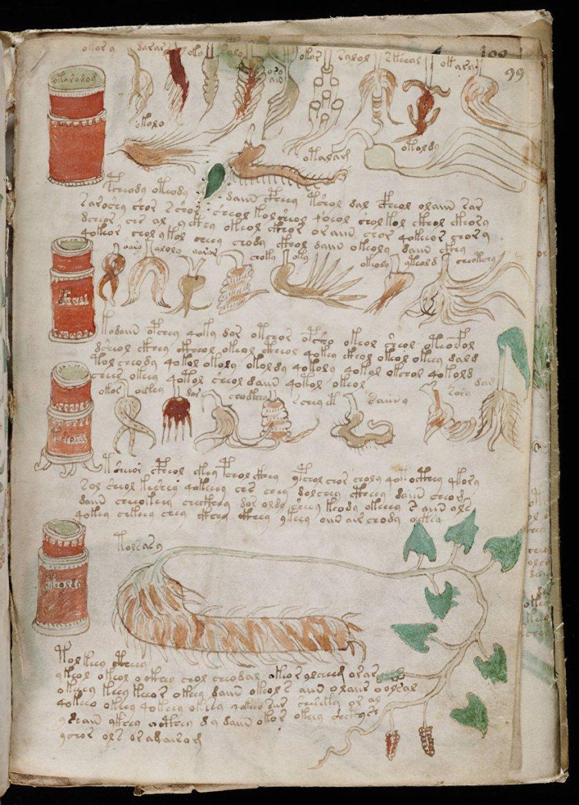 Одна из страниц манускрипта Войнича