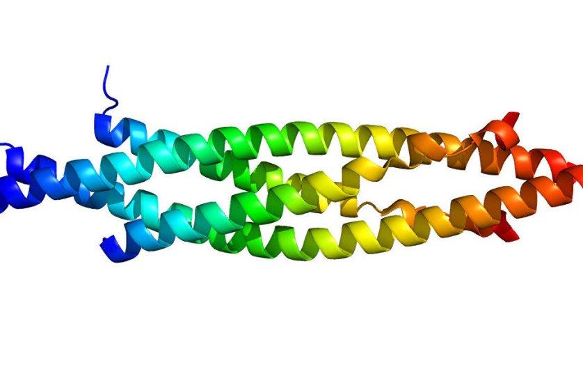 Структура протеина IKBKB