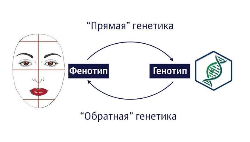 """На схеме представлены отличия """"прямой"""" и """"обратной"""" генетики"""