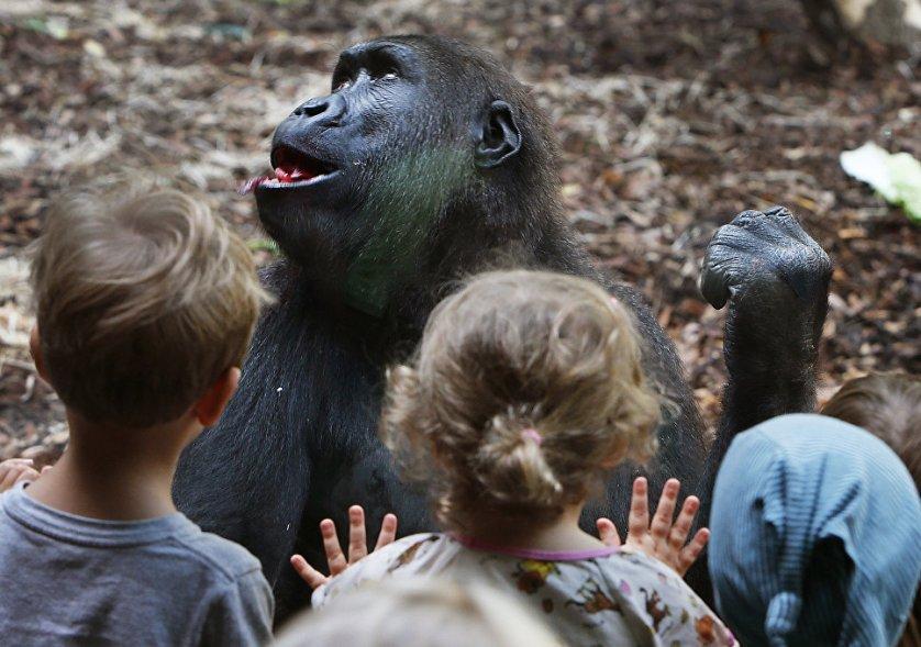 Дети у вольера с гориллой в зоопарке Франкфурта, Германия.