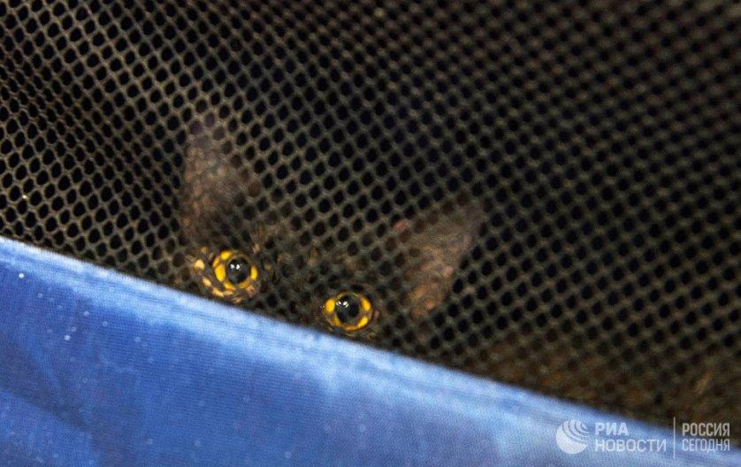 Кошка Лиана, пострадавшая во время пожара в одном из подсобных помещений Эрмитажа.