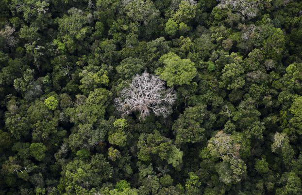 البرازيل تعيد فرض حظر على التعدين في الأمازون