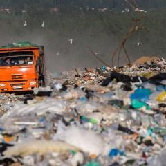 Озеленение трех закрытых мусорных полигонов в Подмосковье начнется в 2019 году
