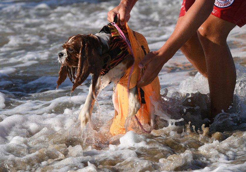 Турнир Surf City Surf Dog в этом году проходил уже в девятый раз. На фото: участник соревнования, собака Далила.