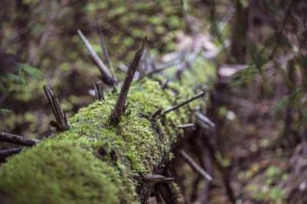 Россияне могут получить возможность бесплатно собирать валежник в лесах