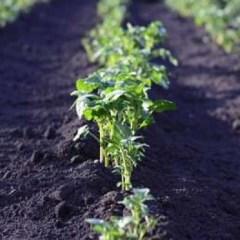 Исследование: вымирание биологических видов угрожает пищевым ресурсам человечества