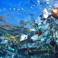 На Земле Франца-Иосифа нашли следы загрязнения пластиком