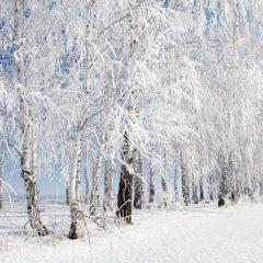 Зима близко: В Россию возвращаются суровые зимние холода