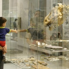 СМИ: ученые назвали вымирание динозавров случайностью