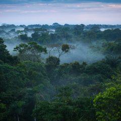 دراسة هي الأولى من نوعها : الغابات أساسية لتحسين تغذية الأطفال !