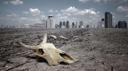 Исчезновение видов: время бить тревогу