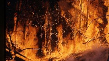 В Канаде более трех тысяч человек эвакуировали из-за лесных пожаров