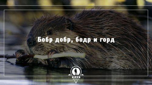 11 скороговорок про животных