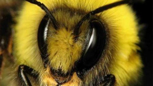 Самые правильные пчёлы