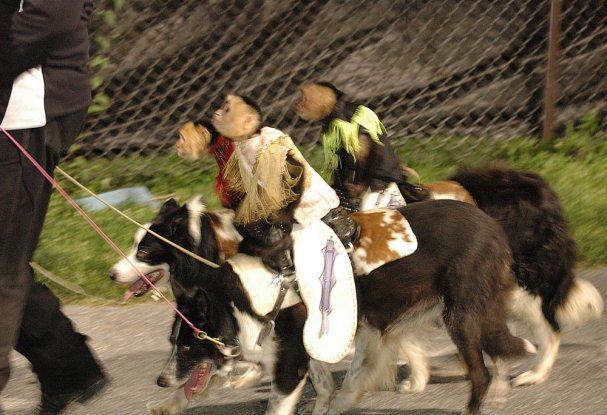 cowboy-monkey-rodeo22