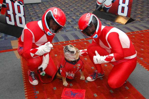 ovie-the-bulldog-brouwer-rangers
