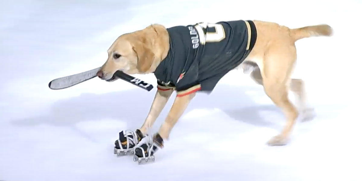 An ice-skating dog took the ice at a Vegas Golden Knights game. He wowed everyone. - Russian Machine Never Breaks