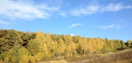 Forest. Autumn. Russia