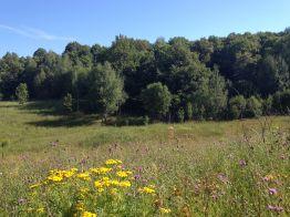 A Field in Russia in July