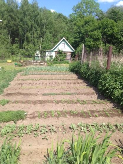 empty vegetable garden