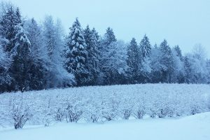 3-Blueberries-Winter