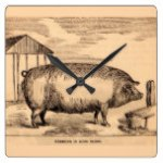 19th century pig print 'Breeder in Good Flesh' Square Wall Clock