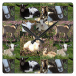Baby Goat Kid Farm Barnyard Animals Farmhouse Art Square Wall Clock