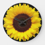 Giant Yellow Garden Sunflower on Black Background Large Clock