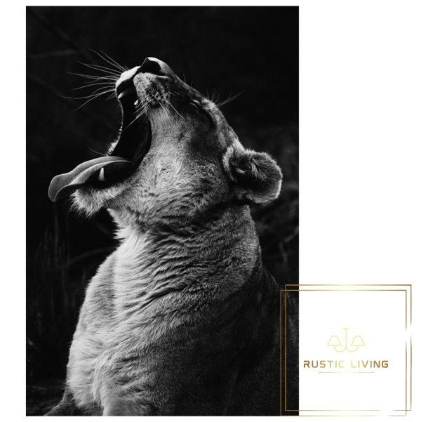 Lioness Plexiglas Schilderij zwart wit foto meerdere maten