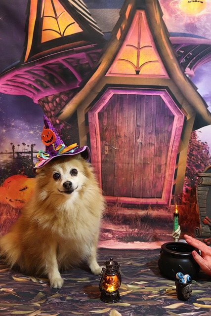 Pomeranian Witch