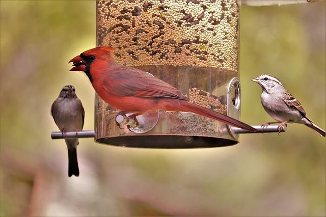 Five Fun Bird Feeders for Under $25