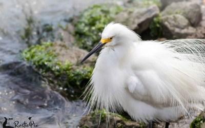 Edwin B. Forsythe NWR:  NJ Bird Photography Paradise