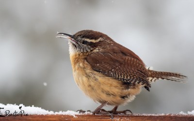 The Great Backyard Bird Count is Here – Will it be the Biggest One Ever?