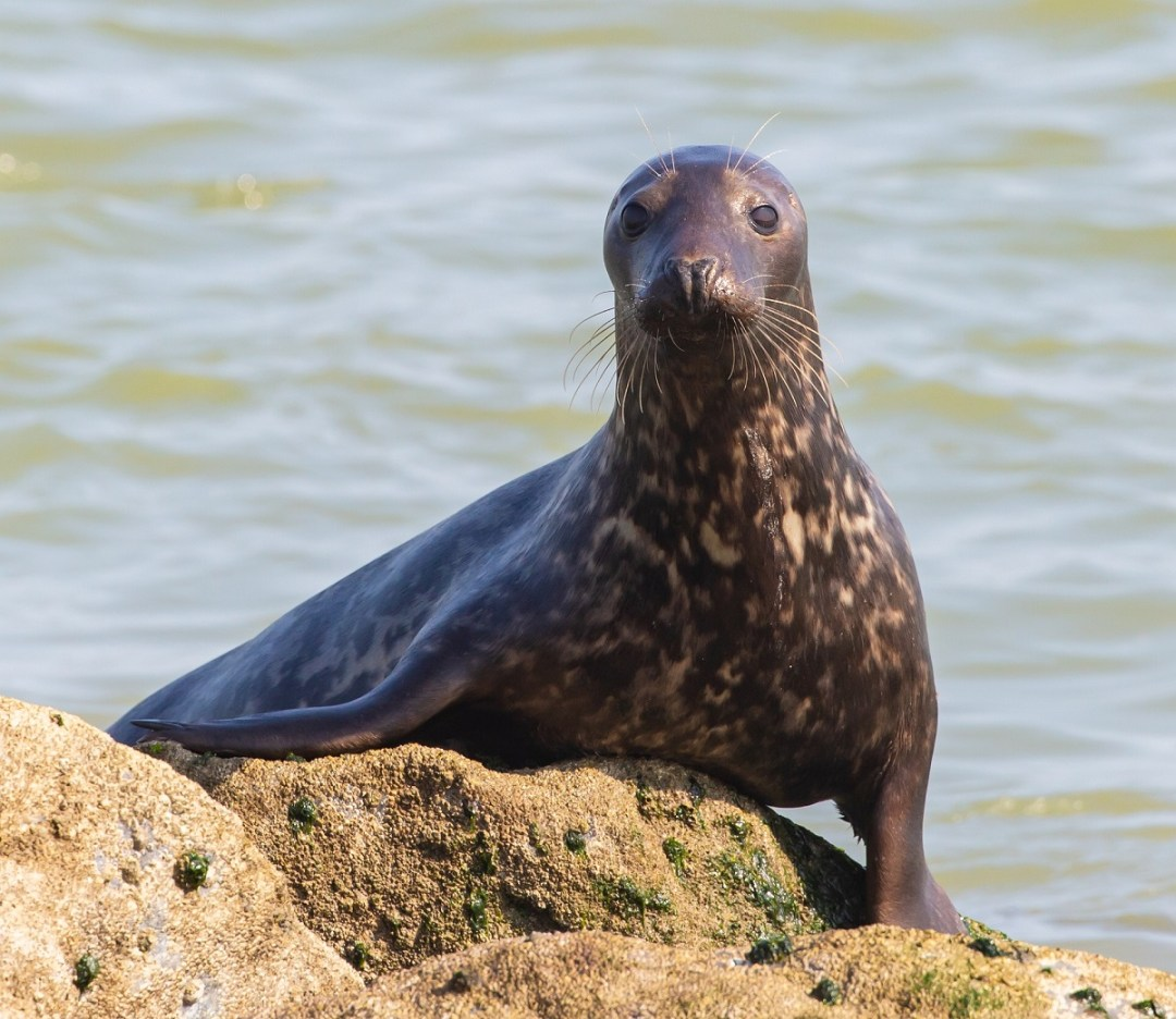 seal-pup-theotherkeve