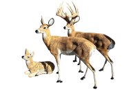 Deer Statues Outdoor Decor - Home Decorating Ideas