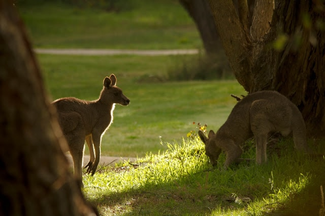 Morning - the neighbours from the golf course next door came to visit