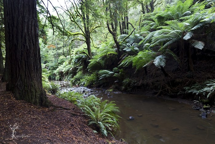 Fern Gully on the Aire River